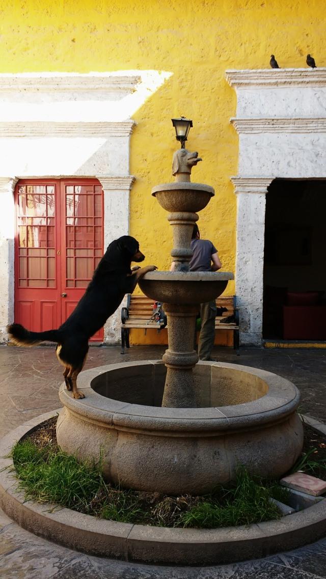 Flying dog hostel - Arequipa - Pérou