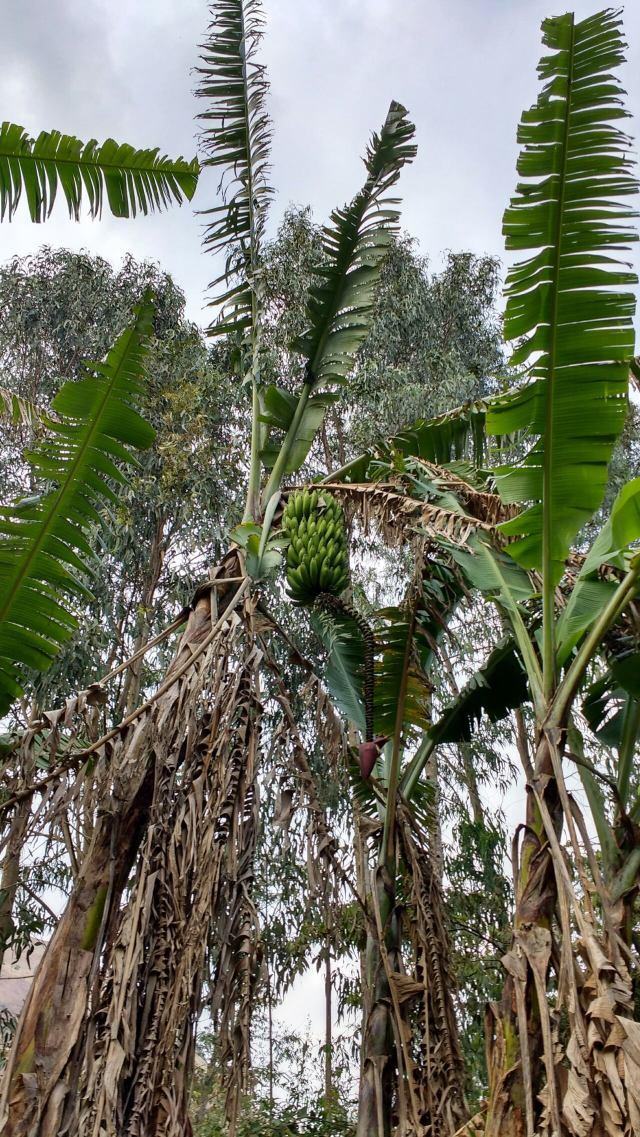 Salkantay trek - jungle - machu picchu - Pérou