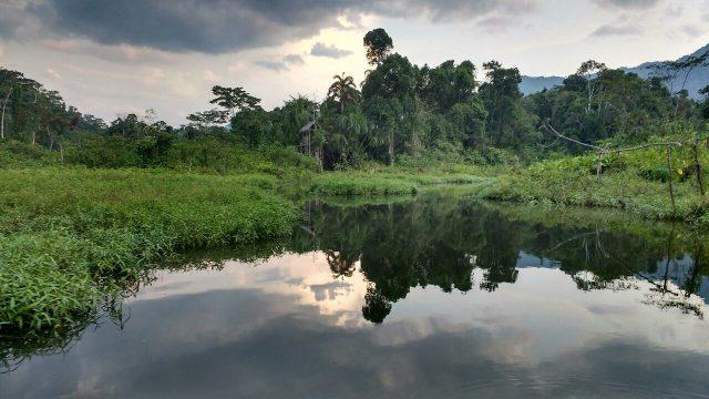 Salvacion - Jungle manu - Amazonie - Pérou