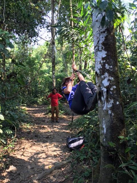 Liane - Salvacion - Jungle manu - Amazonie - Pérou