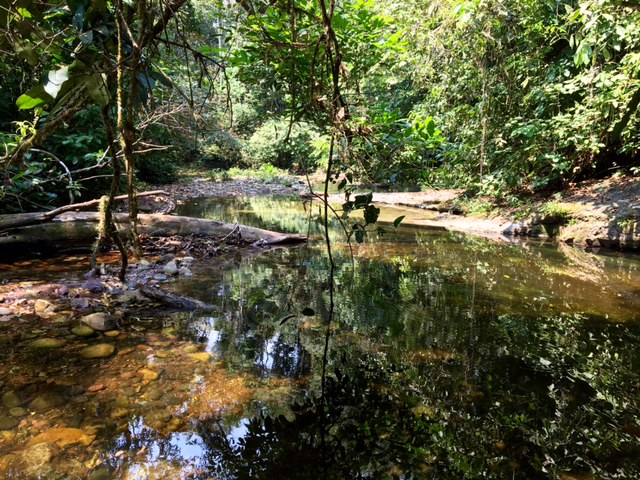 Piscine naturelle - Shintuya - Jungle manu - Amazonie - Pérou