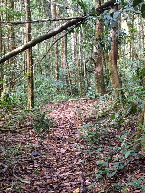 Shintuya - Jungle manu - Amazonie - Pérou