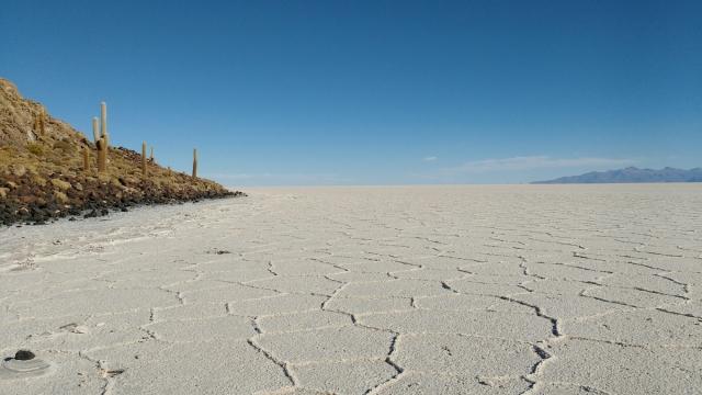 Inca Huasi island - Salar d'Uyuni et Sud-Lipez - Bolivie