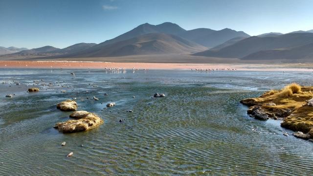 Laguna colorada - Salar d'Uyuni et Sud-Lipez - Bolivie