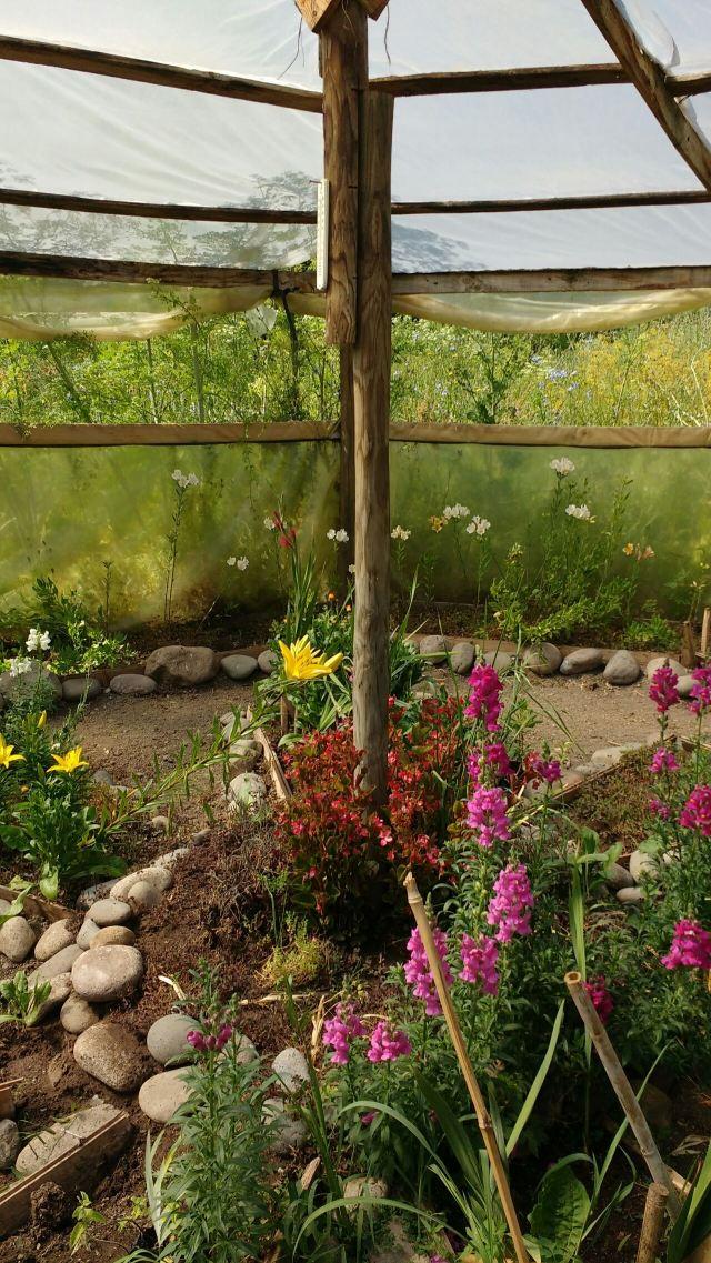 Serre de fleurs - Volontariat - Eka Chakra - Hare Krishna - Catemu - Chili
