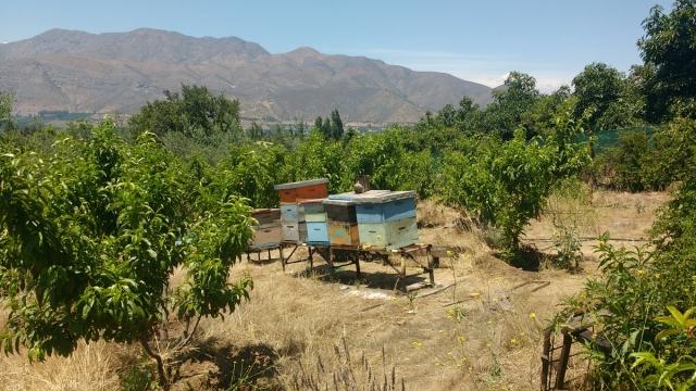 Ruches d'abeille - Catemu