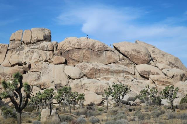 Joshua Tree National Park - Californie - USA
