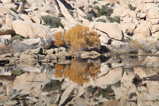 Joshua Tree National Park - Barker Dam - Californie - USA