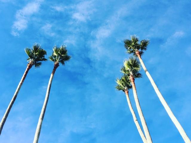 Santa Cruz - Palmiers - Californie - USA