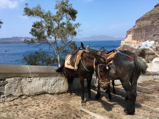 Fira - vers le vieux-port - Santorini - Grèce
