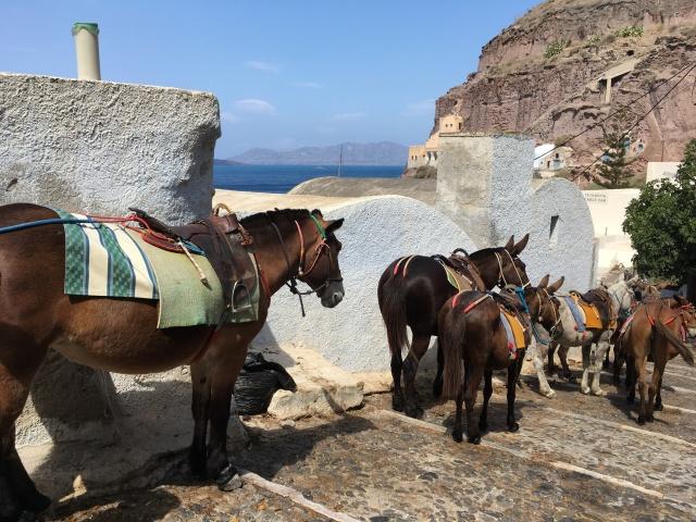 vers le vieux-port - Santorini - Grèce