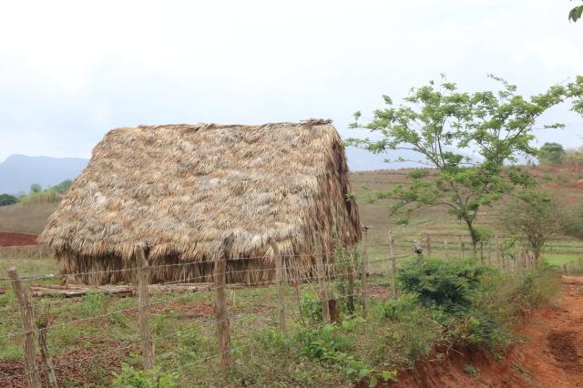 Vinales - Cuba - tabac, café, mogotes - cabane
