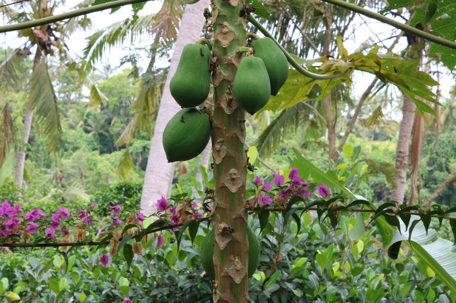 papaye - ubud - bali - indonésie